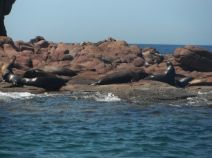 Happy life on the rocks