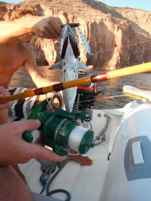 Rob's big tuna catch. Note the broken reel!