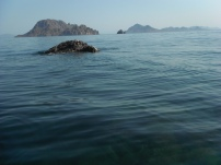 My very own pinnacle rock - lots of fish