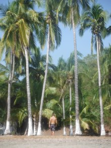 Will hears a coconut drop and goes to investigate