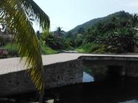 Pretty palms in La Manzanilla