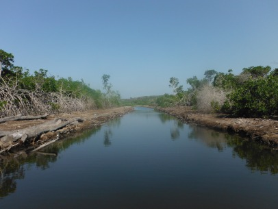 Sadly, about a mile into the estuary all of the mangroves and forest have been cut down