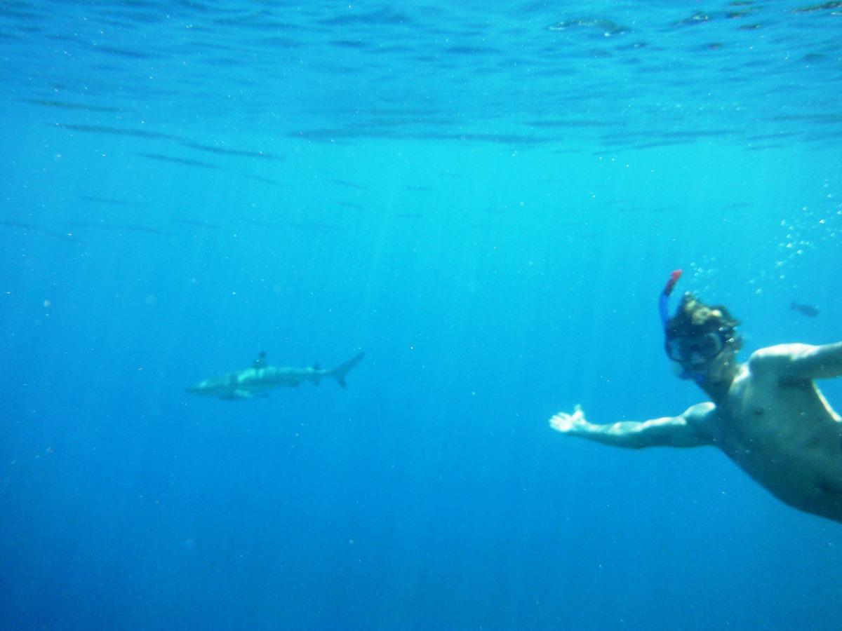 Десятилетием мальчика, открытка акула и зона комфорта