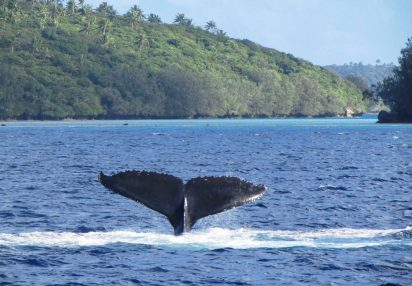 Chasing whale tails