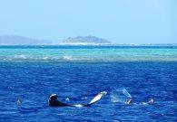 Snorkeling so close