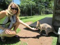 Hand feeding at the Lone Pine Koala Sanctuary