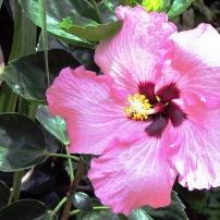 16 Flower