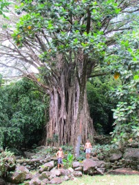 23 Avatar Tree