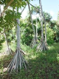 25 Teepee Trees