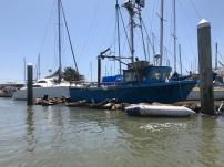 Sealions sinking the marina docks