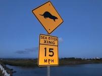 Sea Otter Crossing
