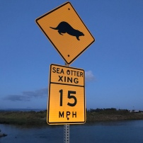 Sea Otter Crossing