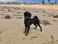 Salty lovin' beach life